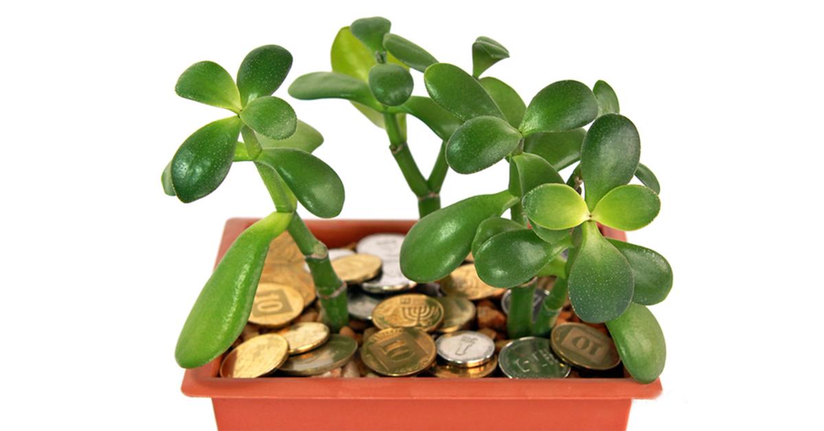Как вырастить деньги в домашних условиях